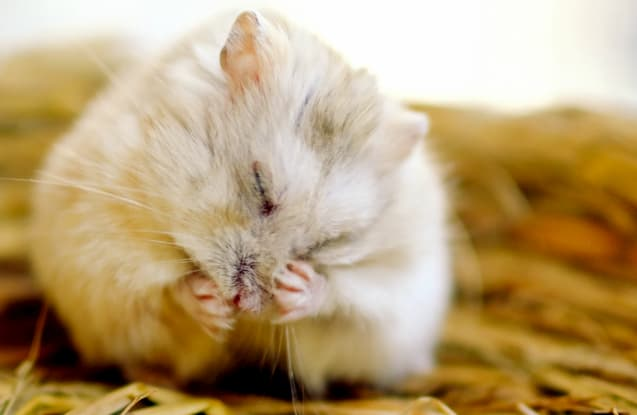 How to care for a mouse