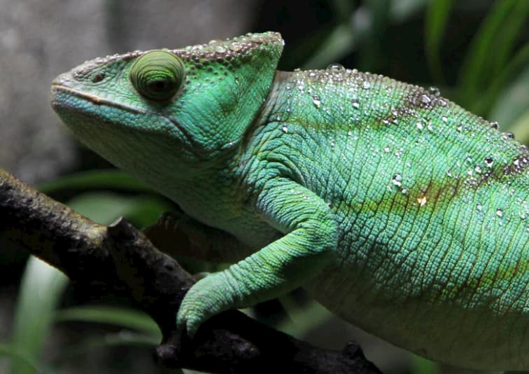 How to look after reptiles