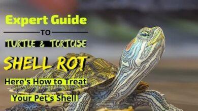 Shell-Rot treatment