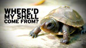growing shell