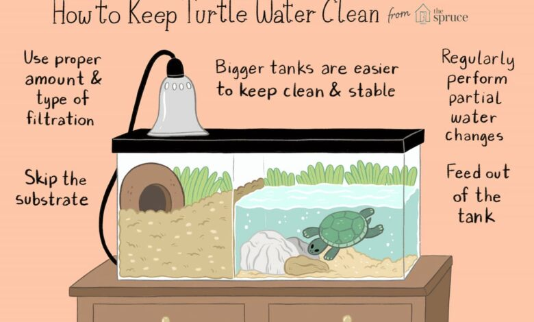 keeping-water-in-your-turtle-tank-clean